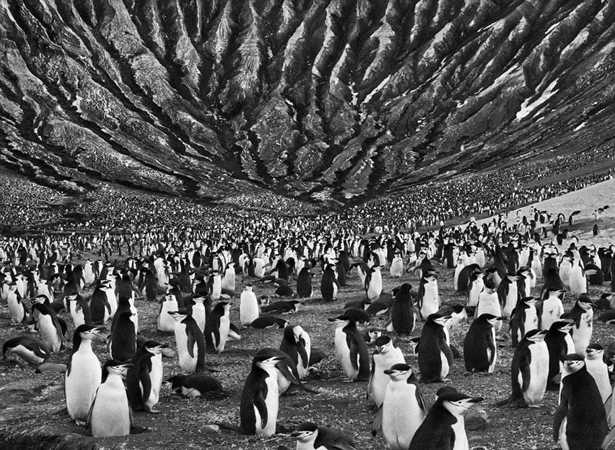 Salgado_Colonia-de-pingüinos-en-Mount-Michael-fotógrafo-Sebastião-Salgado